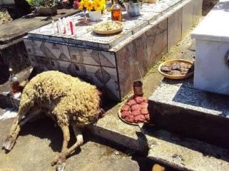 ritual-macumba-animais-divulgacao_00141956_0